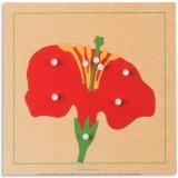 Puzzle de botanique : fleur