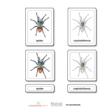 Parts of a Spider (Arachnid)