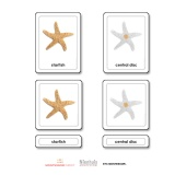 Parts of a Starfish (Echinoderms)