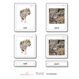 Animal Groups 3 Part Cards