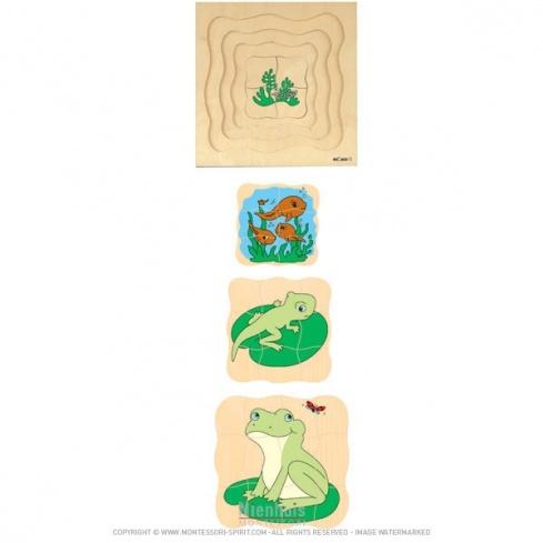 Puzzle évolutif - Grenouille