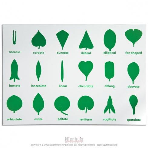 Feuille de contrôle cabinet de botanique