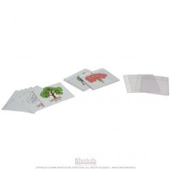 Premier jeu de cartes de botanique en anglais