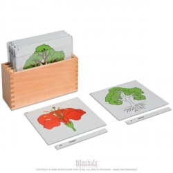 Boite de rangement premier jeu de cartes de botanique