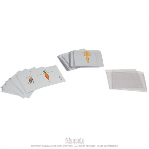 Deuxième jeu de cartes de botanique en anglais