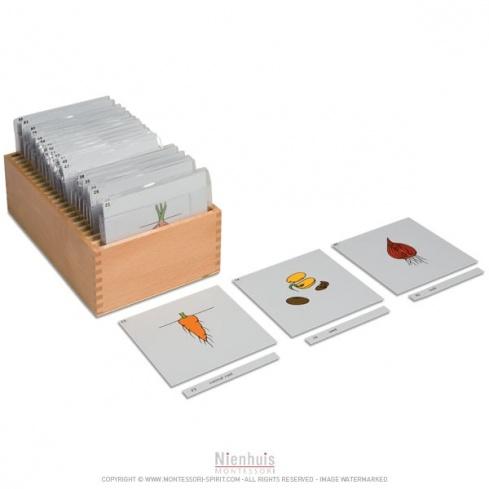 Boite de rangement deuxième jeu de cartes de botanique