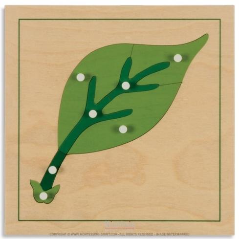 Puzzle de botanique : feuille