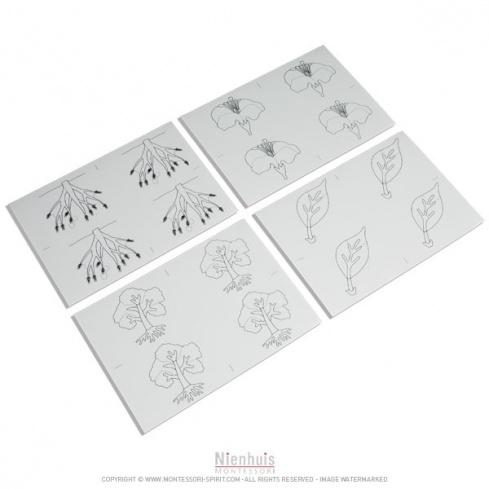Modèles de dessin de botanique