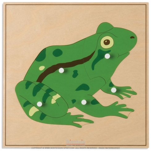 Puzzle animal : grenouille