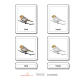 Parts of a Bird (Aves)