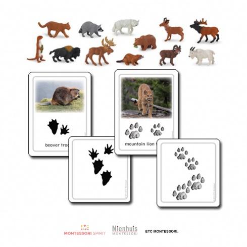North American Animal Tracks w/ Objects
