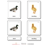 Animal Young 3 Part Cards