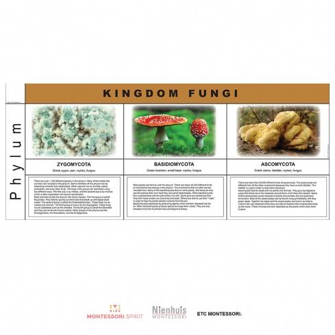 Fungi Kingdom Charts